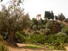 Kolymbetra Gardens