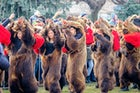The Bear Dance Festival, Comănești