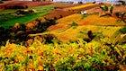 Le Velette Winery