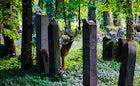 Central Cemetery (Zentralfriedhof) Vienna