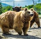 Bear's Shelter in Tskhvarichamia