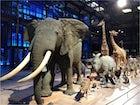 La grande galerie de l'évolution, Jardin des Plantes