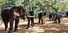 Thitgatoeaing elephant camp