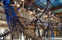 Musée des Sciences Naturelles