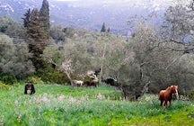 Carolina's Holiday Horses Corfu