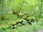 Biełaviežskaja Pušča National Park