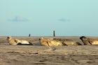 Wadden Sea National Park