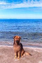 Monty's dog beach & bar