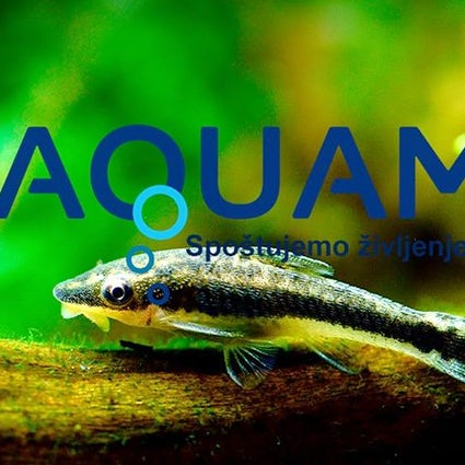 Aquarium M Idrija