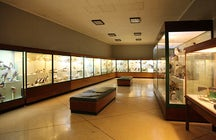 National Museum of Natural History, Malta
