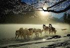 Husky sled ride Tromsø