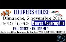 Aquarium Club du Pays Des Lacs LOUPERSHOUSE