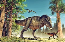 Dinosaur and Adventure Park of Rezi
