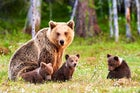 ARCTUROS Bear/Environmental Sanctuary