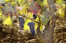 "Enjoy a glass of wine ""La Rioja"" in medieval Haro"