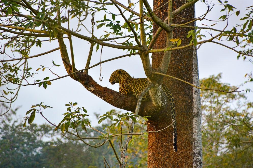 © Wikimedia Commons/ Paramanu Sarkar