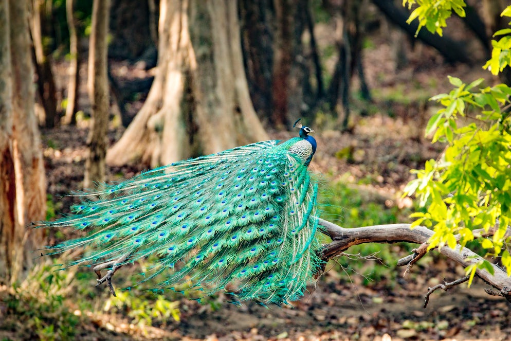 © istock/ Prasanna S