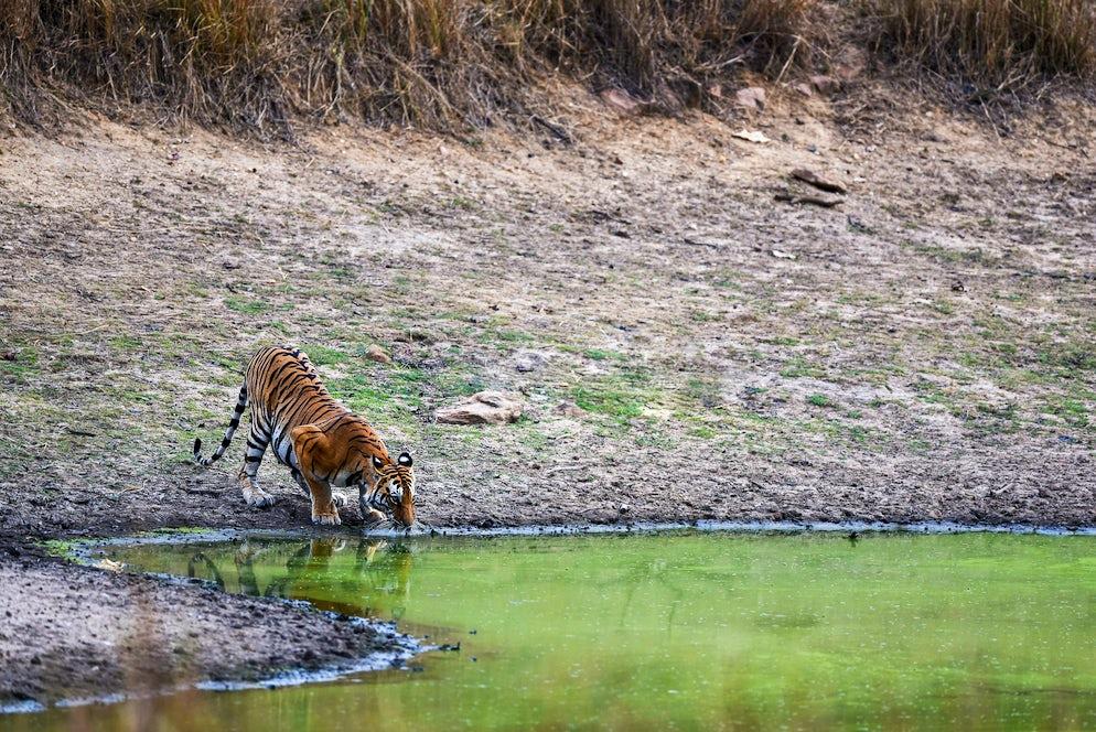 © istock/ Sourabh Bharti