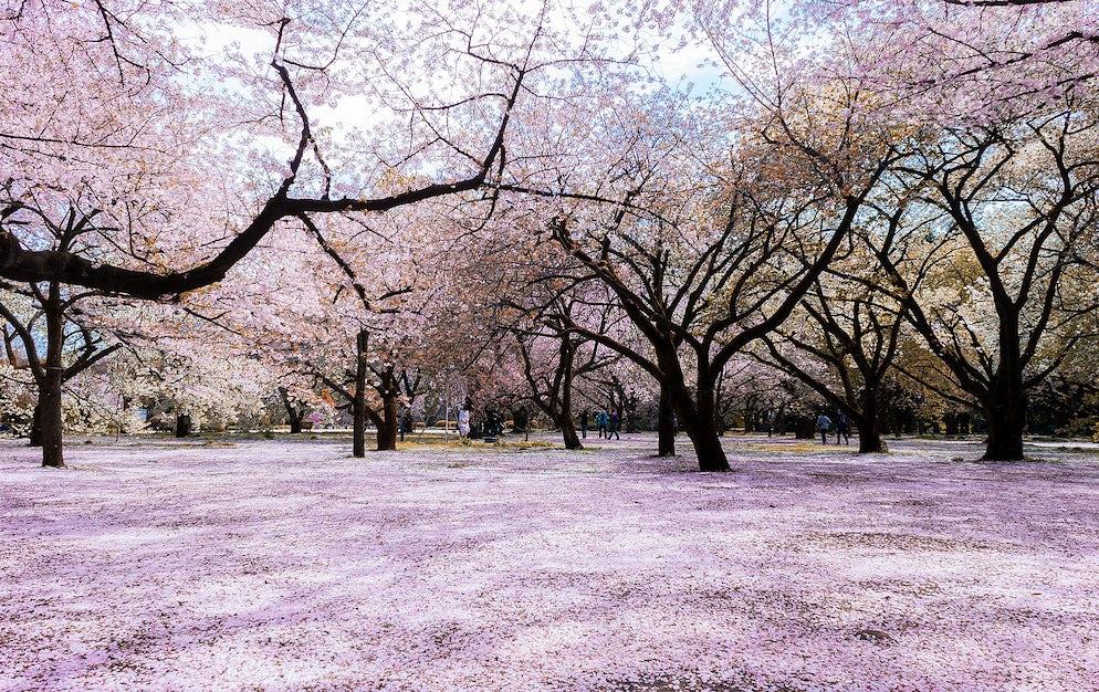 ©Wikipedia/Kakidai