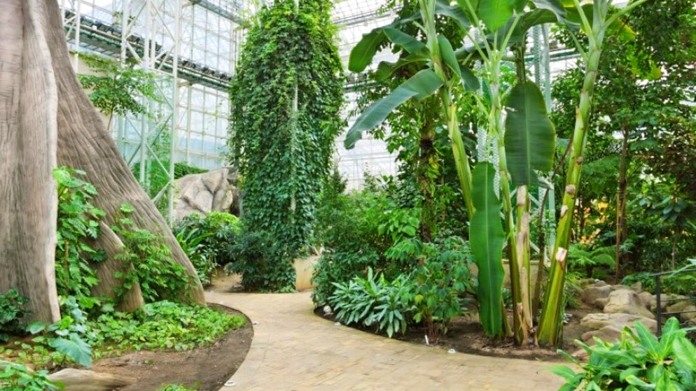 Botanička bašta Jevremovac, zaboravljeni raj u centru Beograda 99c3ce42-5a09-49ee-b956-6c8f6e6149bf-botanicka-basta1-880x495