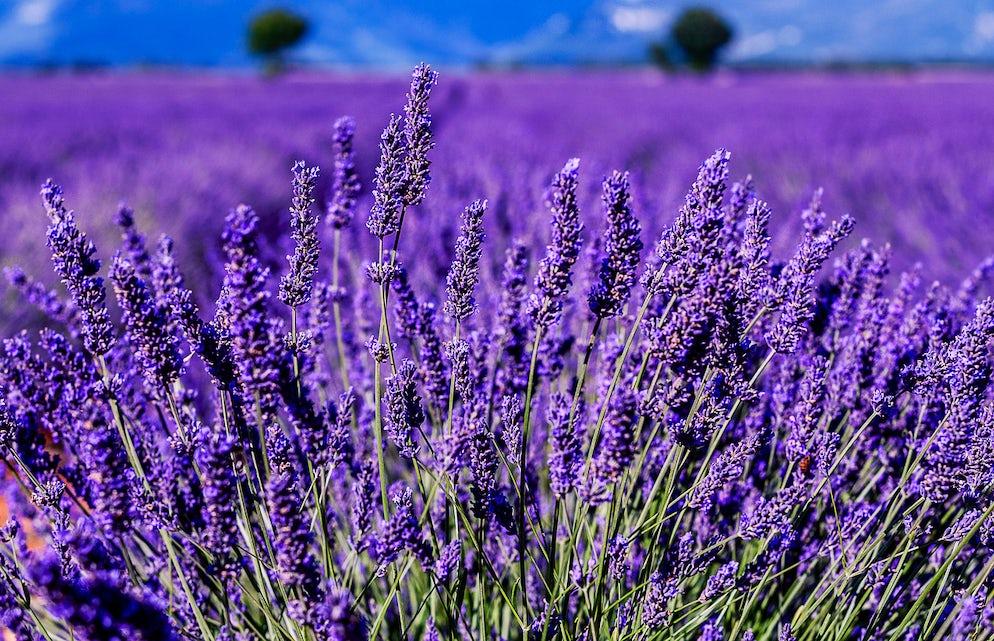 © iStock/Provence Photos