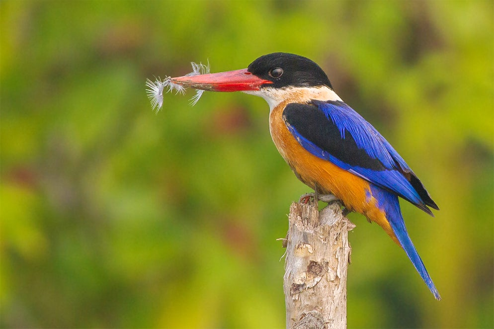 © Wikimedia Commons/ Soumyajit Nandy