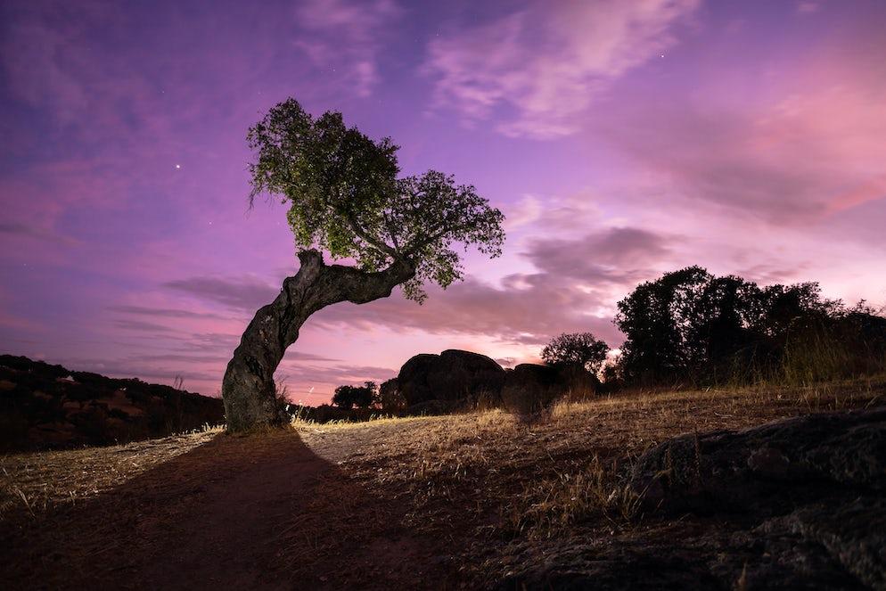 © iStock / Javier Conejero