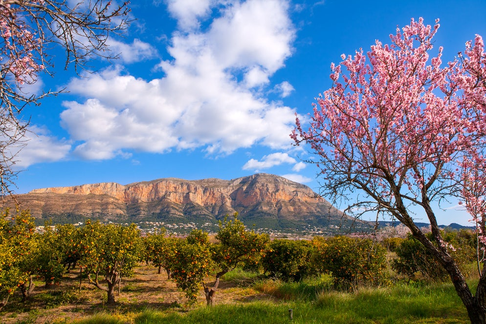 Montgó Mountain with almond tree flowers - Picture © Credits to LUNAMARINA