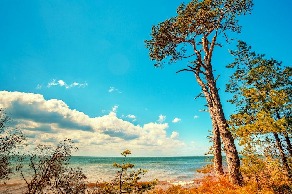 Cover picture © Credits to iStock/vvvita