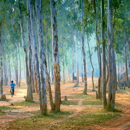 A weekend at Shantiniketan, where nature meets culture