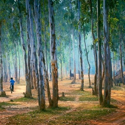 Un fin de semana en Shantiniketan, donde la naturaleza se encuentra con la cultura
