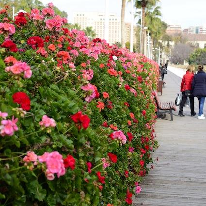 Mañanas de café llenas de flores en Valencia