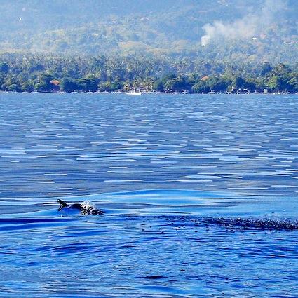 Lovina, una Bali migliore