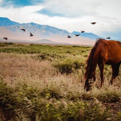 Kazakhstan: the heart of Eurasian steppe