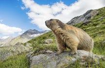 Dolina, którą marmoty nazywają domem - Dolina Krimmler Achen