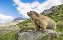 A valley that marmots call home - The Krimmler Achen Valley