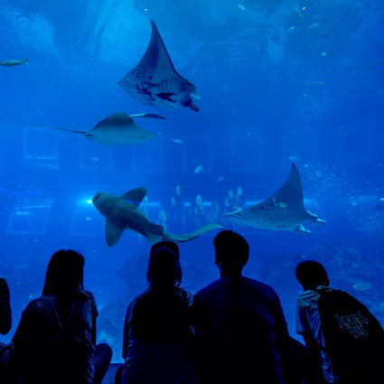 Explore the marine kingdom at Singapore S.E.A Aquarium