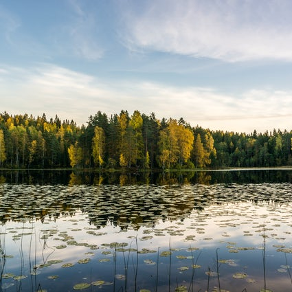 Enjoy a hike in the Nuuksio National Park