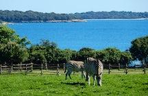 Safari no meio da Europa? A resposta é: Parque nacional Brijuni