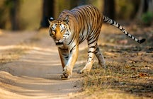 A day trip to Kanha National Park in Madhya Pradesh