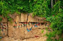 Maravilhas da Amazônia: Reserva Tambopata