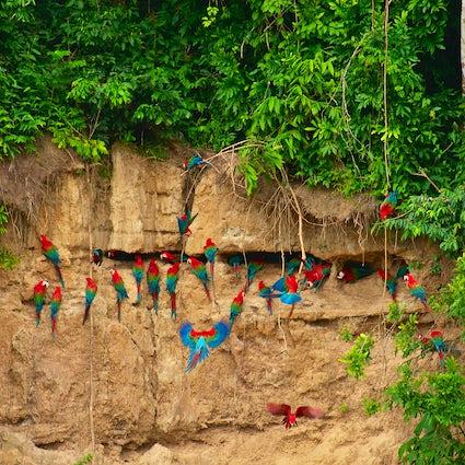 Wunder des Amazonas: Tambopata Reservat
