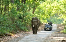 Nature, peace and animals at Jim Corbett National Park, India