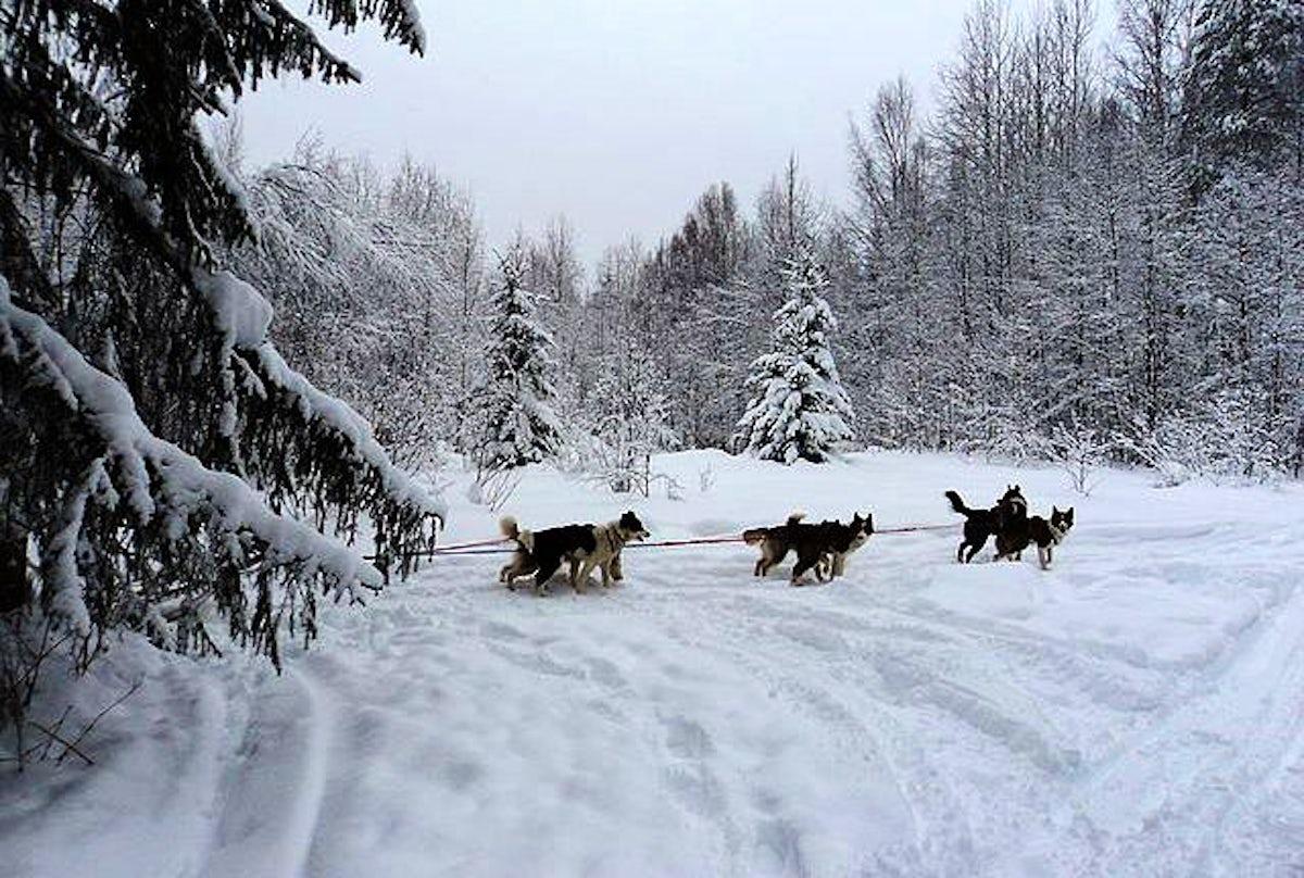 A husky ride in Karelia