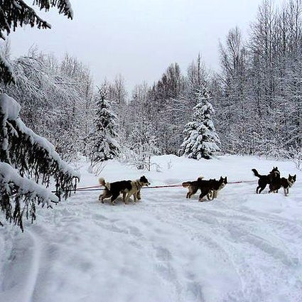 A husky ride in Karelia