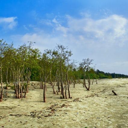 Bakkhali: der perfekte Wochenendausflug im Winter in Westbengalen