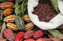 Wild Amazonian cacao and the chocolate capital, Sucre