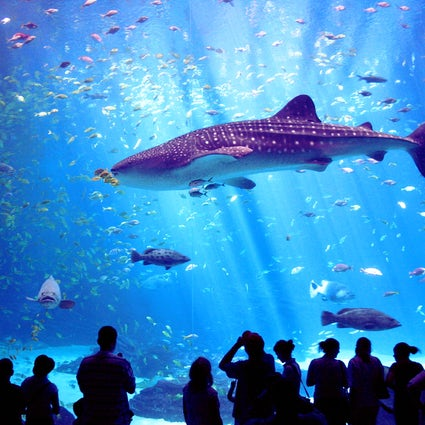 Haus des Meeres, l'aquarium de Vienne