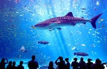 Haus des Meeres – Vienna Aquarium
