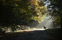 Fruska Gora National Park, the loneliest Serbian mountain